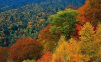 秋天,树叶为什么会变色,树为什么会落叶