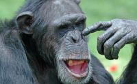 为什么只有人类才会说话?其他动物不会说话吗?黑猩猩怎么交流的?人和动物大脑有什么不同?