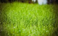 为什么露水只在早晨形成?为什么露水会在草地上形成?