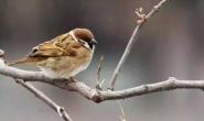 所有的鸟类都在冬天飞往南方过冬吗?大雁燕子冬天为什么要飞往南方?鸟冬天往南飞是因为怕冷吗?