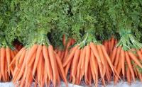 世界上第一根胡萝卜在哪里?中国是胡萝卜最大的种植国家吗?胡萝卜一开始就是橘黄色的吗?